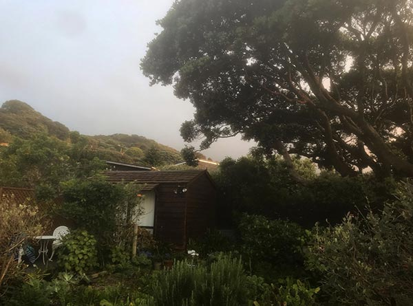 a perfect little cottage at piha